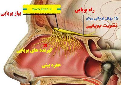 ۱۵ درمان برای نابویایی(آنومی) و ضعف بویایی(آنوسمی)